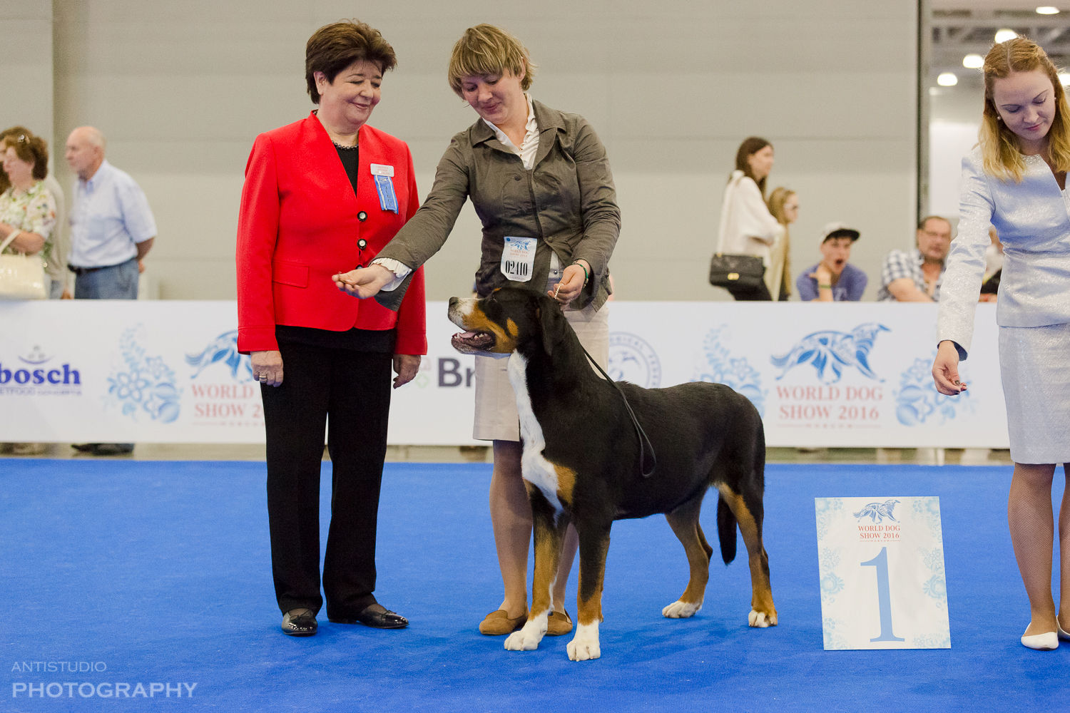 Jetta from CANIS STAR 1st place excellent JCAC Junior World Champion-2016, BOB Junior